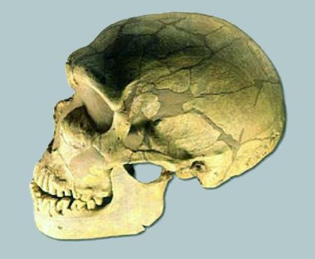 neanderthaler-wikipediafile-thumbnail
