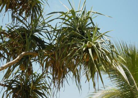 tropischeplant-NicoW-thumbnail-para-vrplaatsen