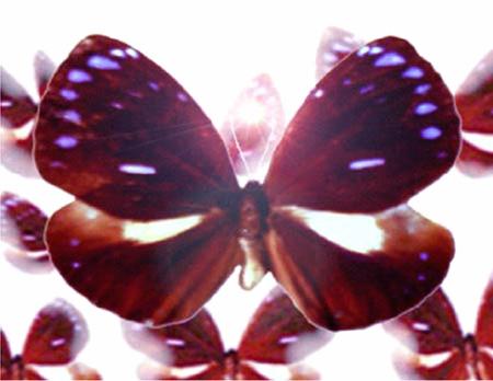 Vlinderhemel-n-quist