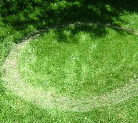 grascirkel-wikip-graanc-thumb