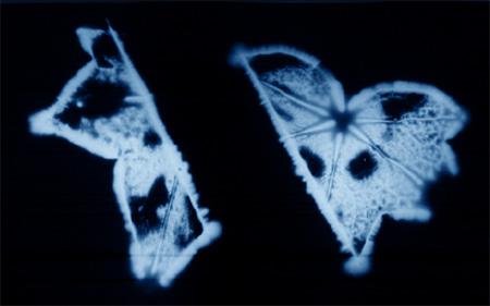 kirlian-aura-leaf-wikip-thumb
