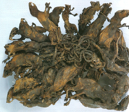 rattenkoning-mummie-wikip-thumb