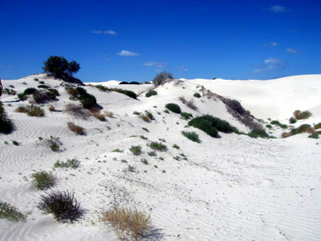 white-sand-dunes-foraminiferen-eyre-peninsula-thumb